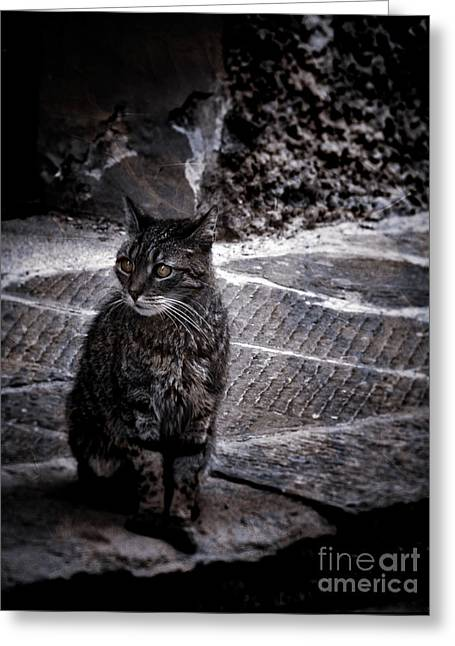 Tortishell Cat Greeting Card by Karen Lewis