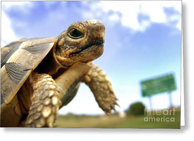 Tortoise On Roadside Greeting Card by Michael Edwards