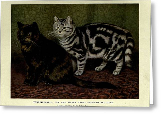 Tortoiseshell Tom And Silver Tabby Cats Greeting Card