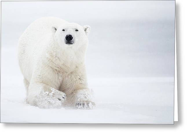 Total White Greeting Card