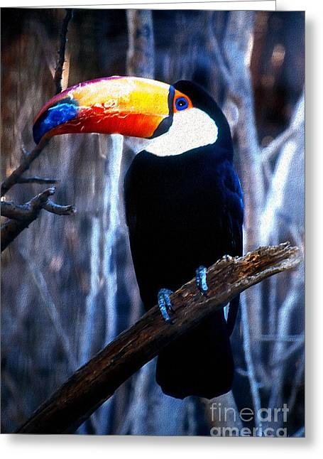 Toucan Greeting Card by Barbara D Richards