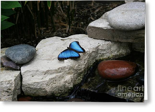 Touch Of Blue Greeting Card by Judy Whitton