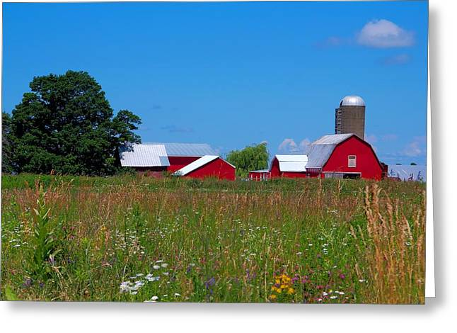 Greeting Card featuring the photograph Touch Of Color by Dave Files