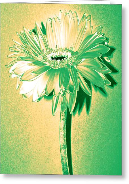 Touch Of Turquoise Zinnia Greeting Card