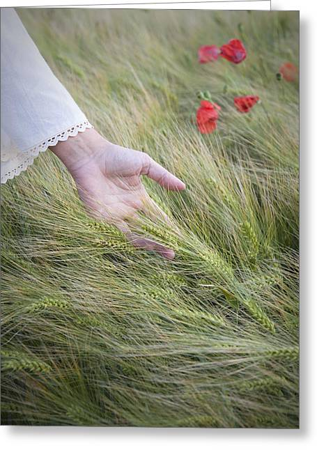 Touch The Poppy Greeting Card