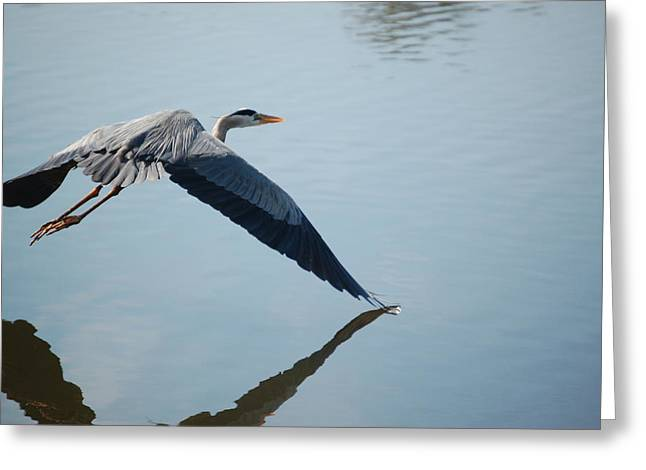 Touch The Water With A Wing Greeting Card