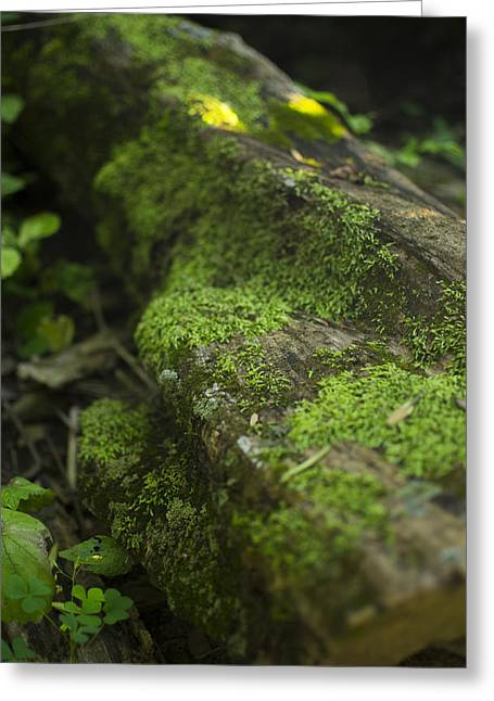 Touched By Nature Greeting Card by Michael Williams