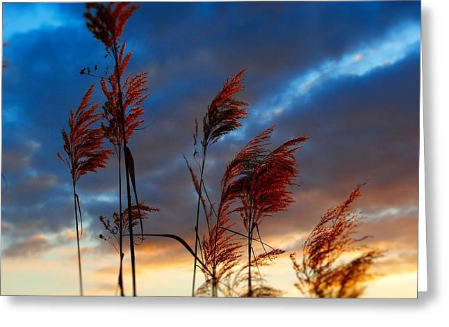 Touched By The Sunset Greeting Card
