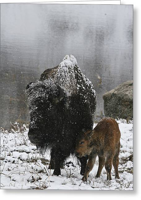 Greeting Card featuring the photograph Toughing It Out by Gary Hall