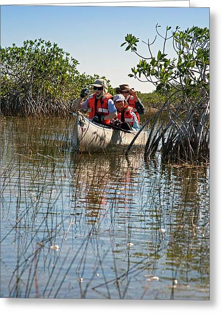 Tourists Canoeing In Mangrove Swamp Greeting Card