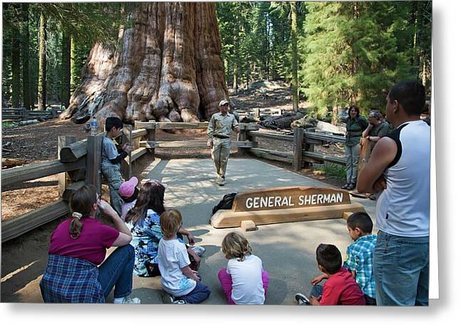 Tourists Visiting General Sherman Tree Greeting Card