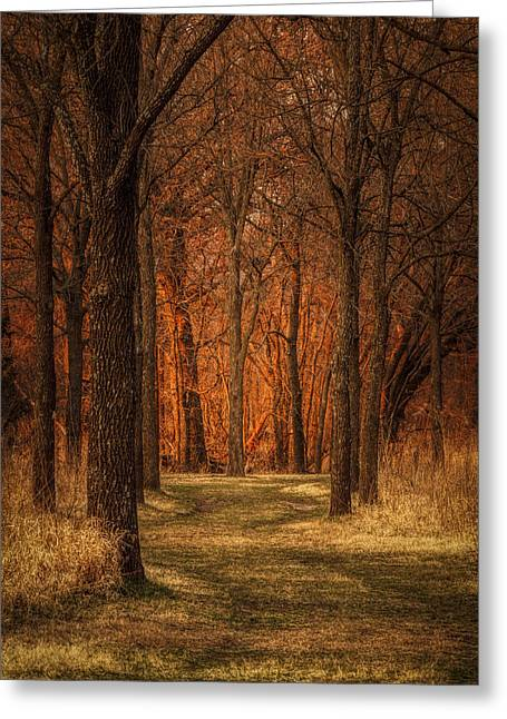 Nature's Cathedral Greeting Card
