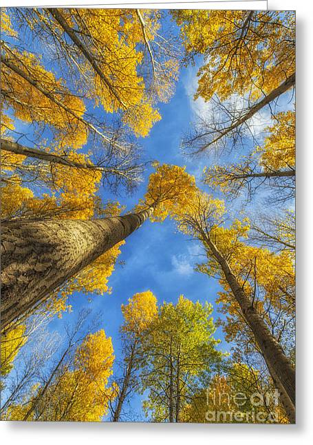 Towards The Blue Sky Greeting Card by Veikko Suikkanen