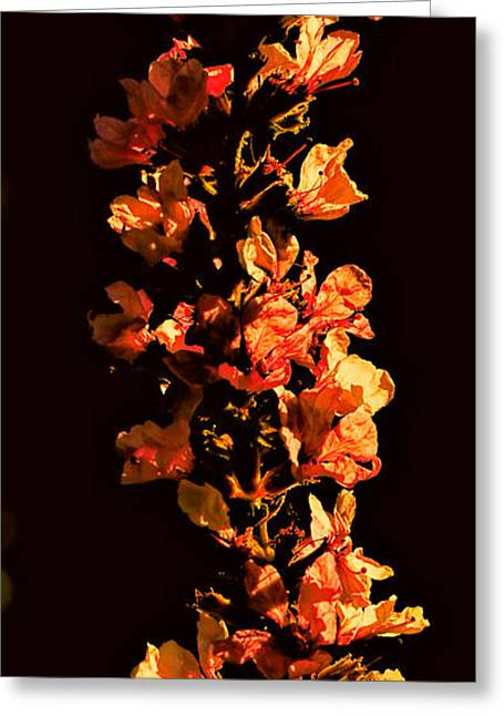 Tower Bloom Greeting Card by Leif Sohlman