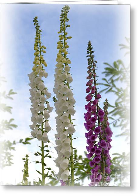 Towering Foxglove Greeting Card