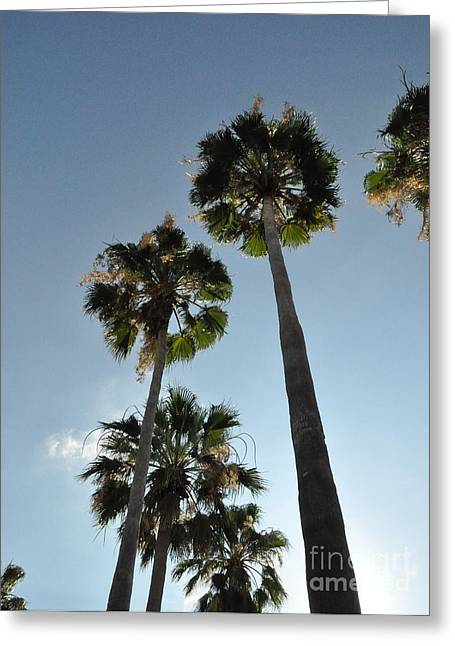 Greeting Card featuring the photograph Towering Palms by John Black