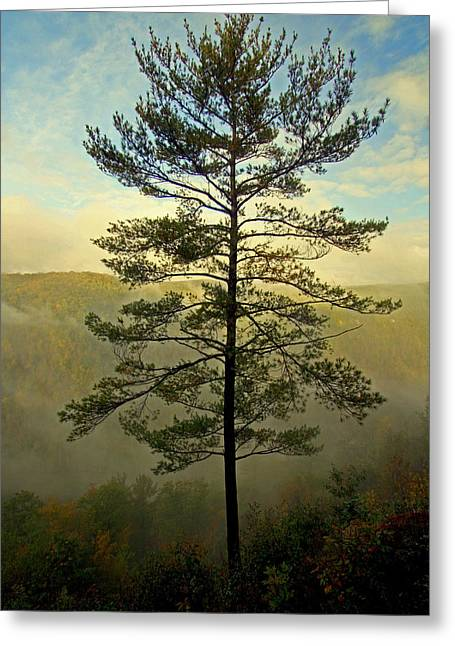 Towering Pine Greeting Card by Suzanne Stout
