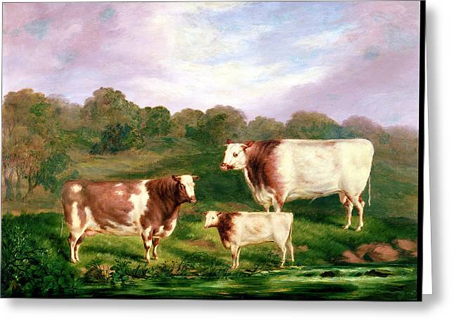 Towneley Pedigrees Greeting Card by Henry Barraud