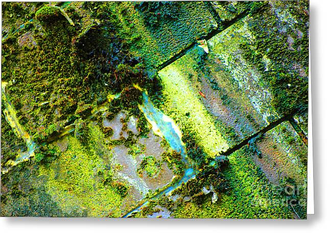 Greeting Card featuring the photograph Toxic Moss by Christiane Hellner-OBrien