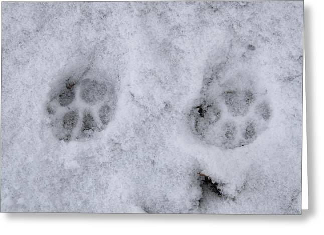 Traces Of A Cat In The Snow Netherlands Greeting Card by Ronald Jansen