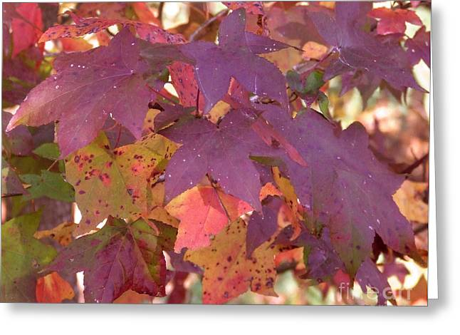 Traces Of Fall Greeting Card by Andrea Anderegg