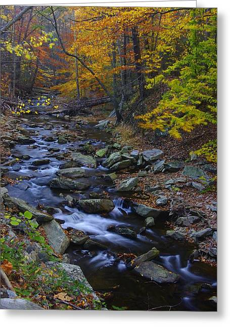 Tracking Color - Big Hunting Creek Catoctin Mountain Park Maryland Autumn Afternoon Greeting Card by Michael Mazaika