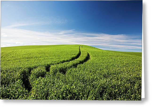 Tracks Leading Through Wheat Field Greeting Card by Terry Eggers
