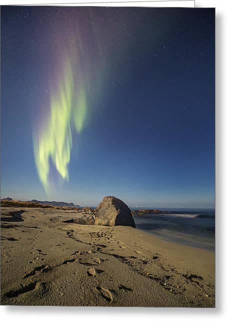 Tracks On The Beach Greeting Card by Frank Olsen