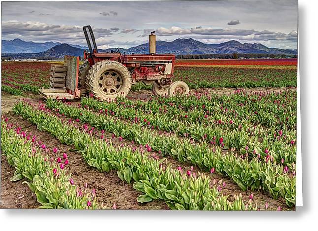 Tractor And Tulips Greeting Card