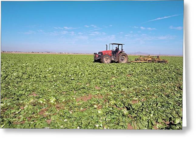 Tractor Clearing A Field Greeting Card by Jim West