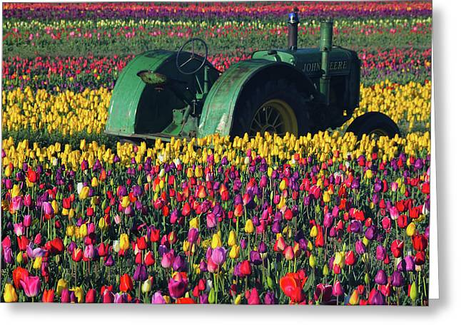 Tractor In The Tulip Field, Tulip Greeting Card