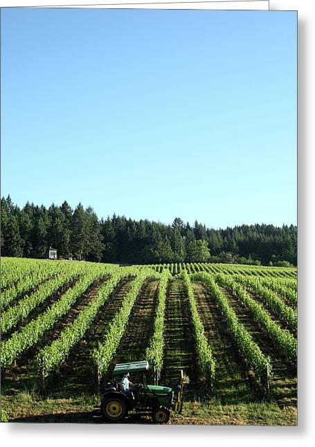 Tractor In Vineyards In The Willamette Greeting Card