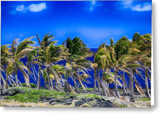Trade Winds Greeting Card by Stephen Stookey