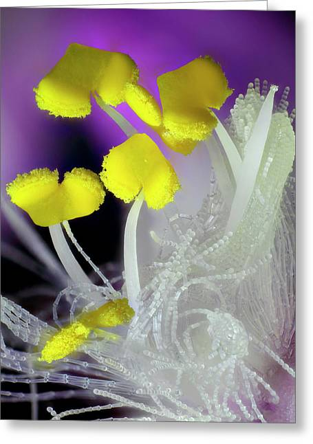Tradescantia Flower Anthers Greeting Card