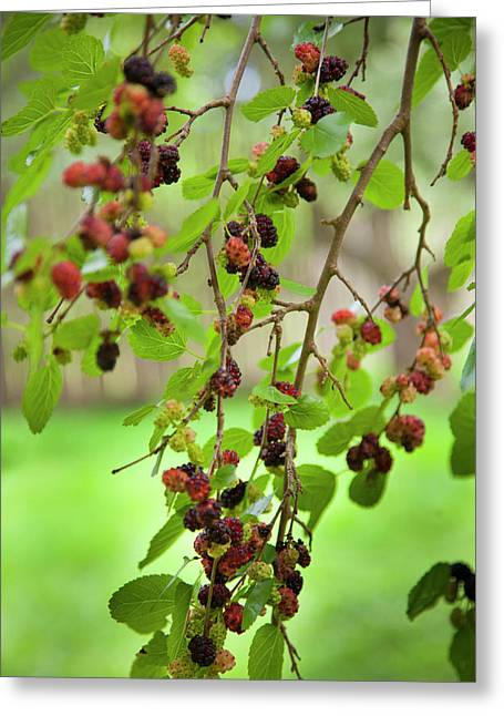 Traditional Foods Such As Berries Greeting Card by Angel Wynn