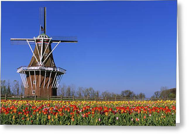 Traditional Windmill In A Tulip Field Greeting Card