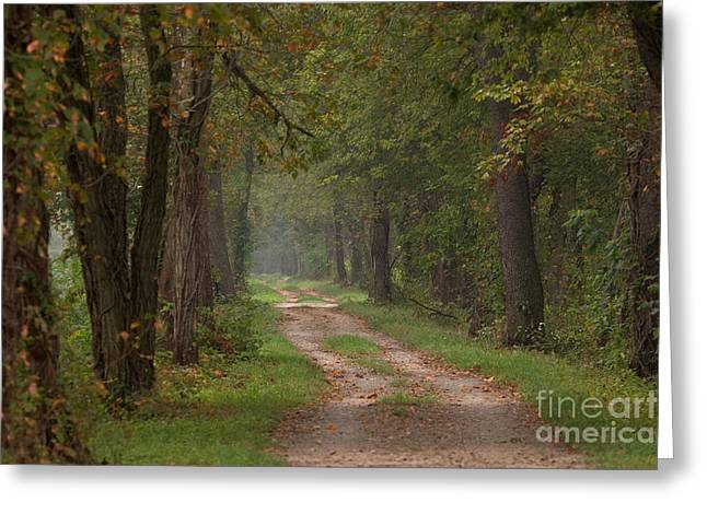 Trail Along The Canal Greeting Card
