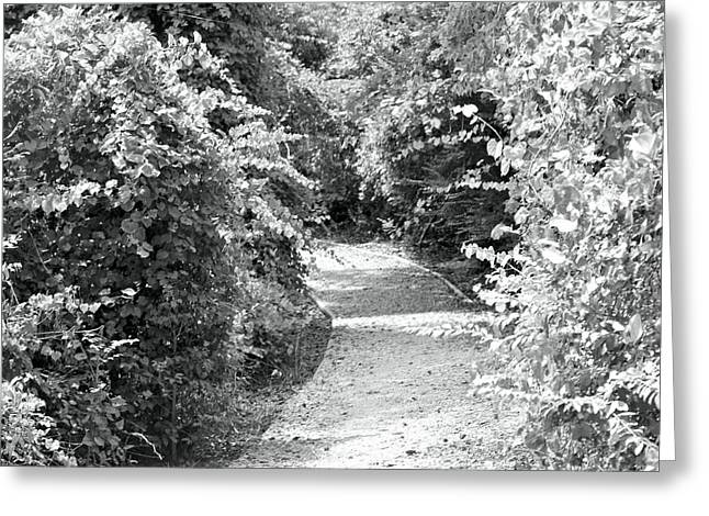 Trail In Black And White Greeting Card by Carolyn Ricks