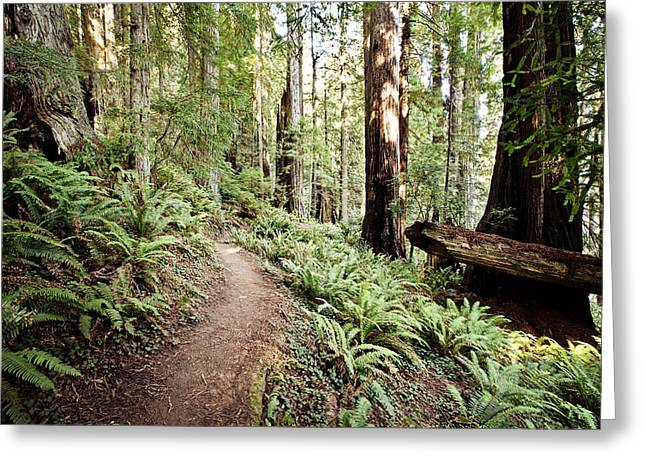 Trail In The Redwoods Greeting Card by Scott Pellegrin