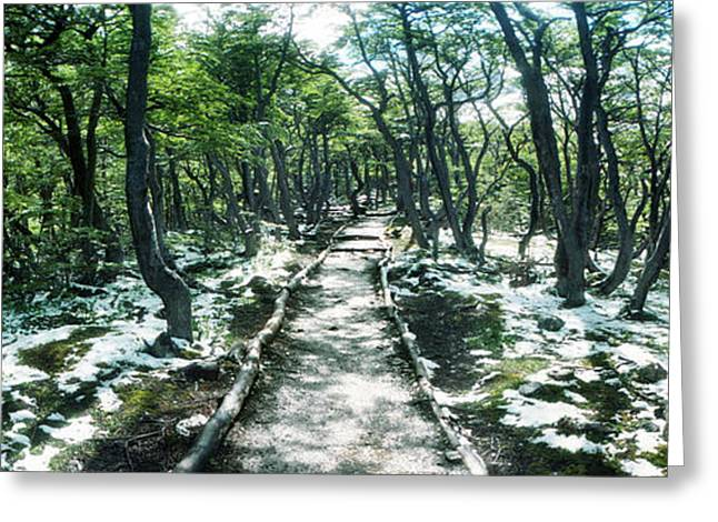 Trail Through The Trees Of Tierra Del Greeting Card by Panoramic Images