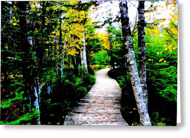 Trail To Autumn Greeting Card by Zinvolle Art