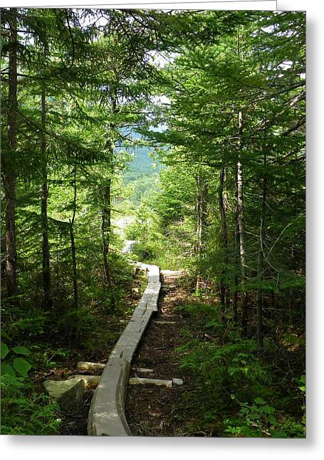 Trail To Sandy Stream Pond Greeting Card