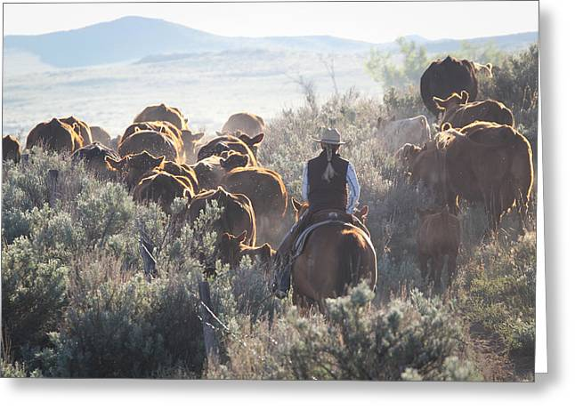 Trailing Cattle Greeting Card