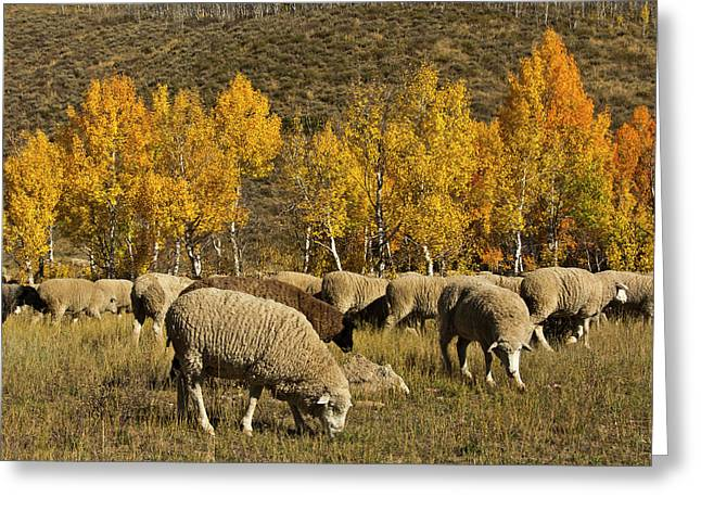 Trailing Of The Sheep Festival, Autumn Greeting Card by Michel Hersen