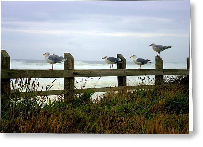 Trained Gulls Greeting Card by John  Greaves
