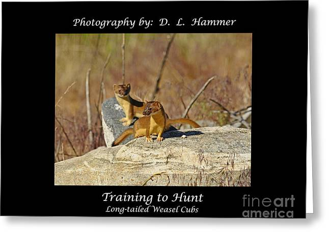 Training To Hunt Greeting Card by Dennis Hammer