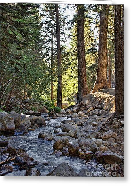Tranquil Forest Greeting Card by Peggy Hughes