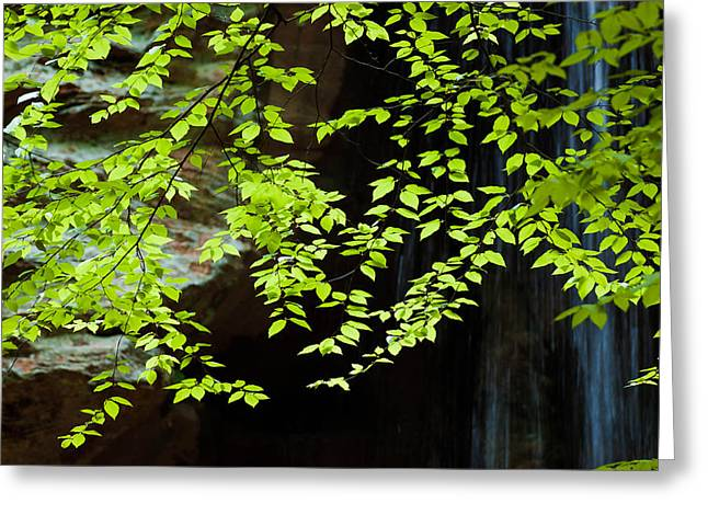 Greeting Card featuring the  Tranquil by Haren Images- Kriss Haren