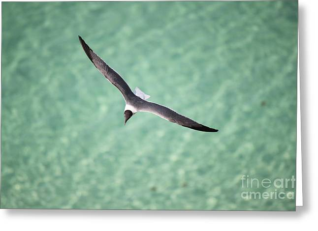 Tranquil Soaring Greeting Card