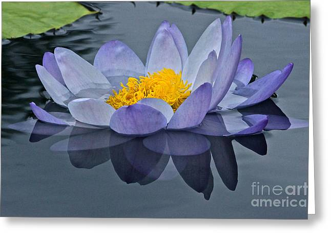 Tranquility Greeting Card by Byron Varvarigos